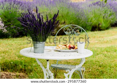 A breakfast table in the garden surrounded by lavenders in peak bloom at Sequim, Washington, US. Peaceful, leisure, relaxation concept. Agricultural landscape - stock photo