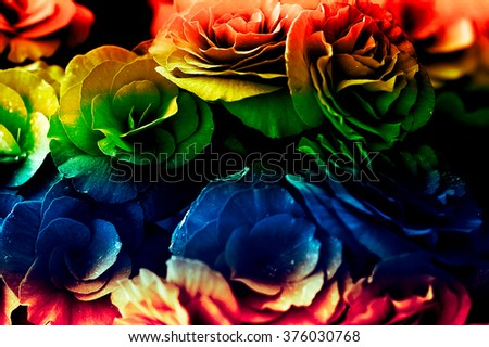 A breathtaking rose displays all its beauty as the sunlight gently strikes its petals. Beautiful for wedding invitations, gardening magazines, advertisements, and many other great ideas and concepts, soft focus - stock photo