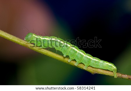 A bright green caterpillar resting on a branch with a multi colored background - stock photo