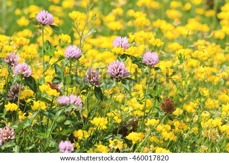 a bright meadow of pink clover and yellow flowers - stock photo