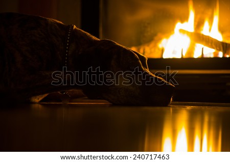 Fire-dog Stock Images, Royalty-Free Images & Vectors | Shutterstock