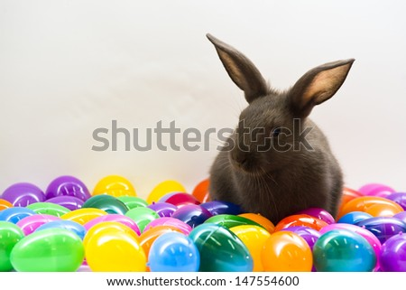 A brown baby bunny rabbit poses among colorful Easter eggs