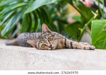 A brown-eyed cat laying down on the marble floor