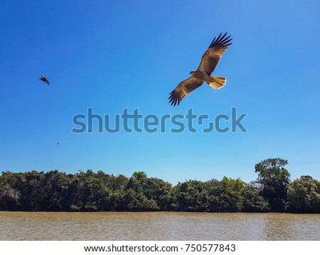 A brown hawk flying alongside a boat on a river