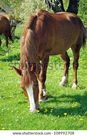 A brown horse grazing - Stock Image