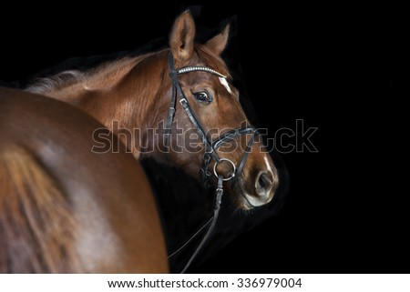 a brown horse with bridle against black background