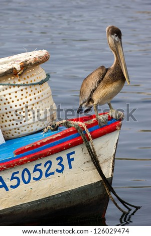 A Brown Pelican (Pelecanus occidentalis) resting on a small boat - stock photo