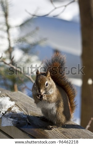 A brown squirrel sits on a rail and eats a seed. The ice and snow of winter are all around.
