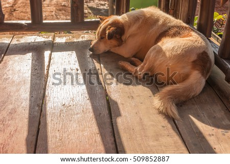A brown-white color dog sleep on the wooden floor with wood fence shadow from sunlight effect along with the floor, Thailand
