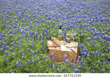 A brown wicker picnic basket with wine, cheese, bread and utensils in a field of Texas Hill Country bluebonnets - stock photo
