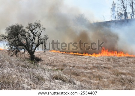 A brush fire approaching a tree - stock photo