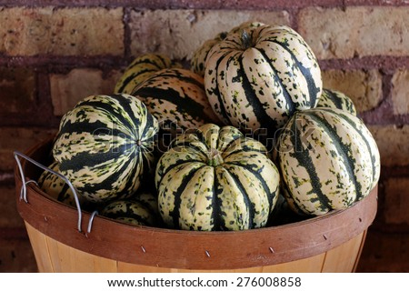 a bucket of carnival squash display at the market - stock photo