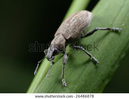 a bug - stock photo