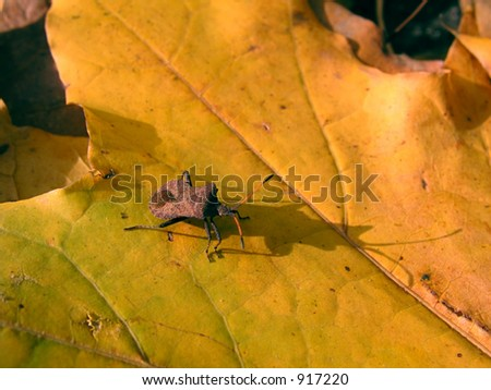 a bug on the yellow leaf