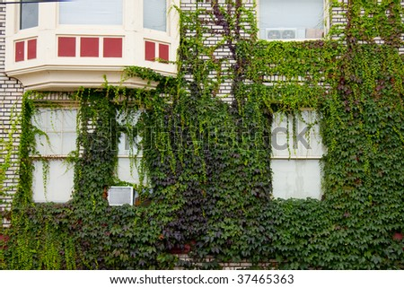 A building covered in ivy and vegetation.