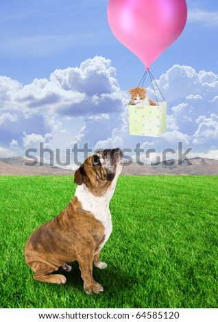 a bull dog and a kitten in a basket - stock photo