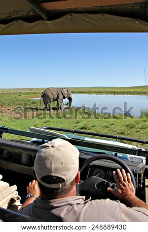 A bull elephant wades into a watering hole in a South African game park as a game ranger looks on. - stock photo