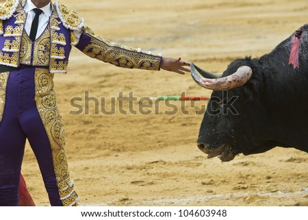 A bullfighter is touching the bull's horn with his hand bravely. - stock photo