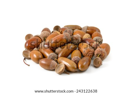 A bunch of acorns on a white background - stock photo