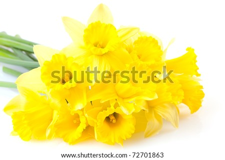 a bunch of daffodils isolated on white background - stock photo