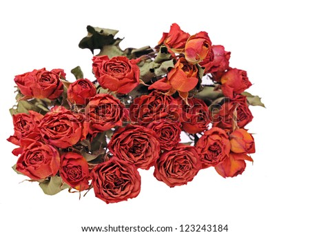 a bunch of dried rose isolated on white background - stock photo