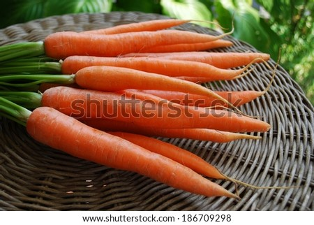 A bunch of fresh carrots on natural background