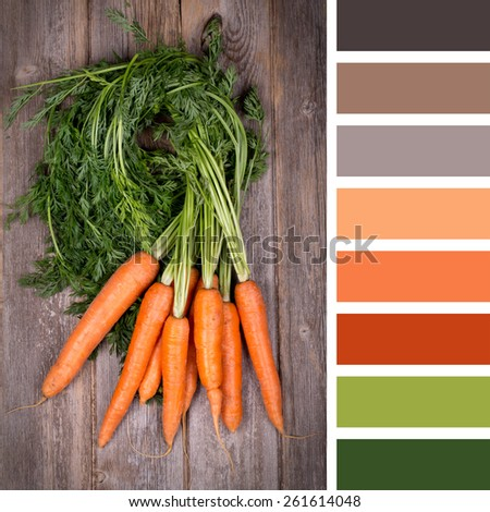 A bunch of fresh carrots on wooden background, in a colour palette with complimentary colour swatches - stock photo
