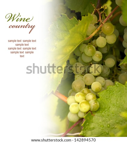 A bunch of green grapes with copyspace for text - stock photo