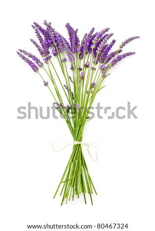 A bunch of  lavender on white background