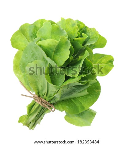 a bunch of  lettuce isolated on white  - stock photo