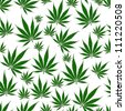 A bunch of  marijuana leaves isolated on a white  background that is seamless - stock photo
