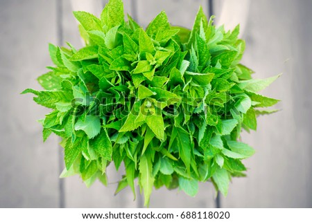 A bunch of mint in womans hands on a blurred wooden background
