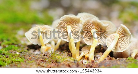 A bunch of mushrooms - stock photo