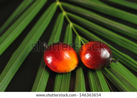 a bunch of oil palm fruits on a green leaves background - stock photo