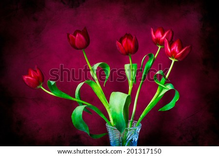 A bunch of red tulips in a cut glass vase against the background of red color. Textured photography. Cheerful and positive composition of spring flowers. - stock photo
