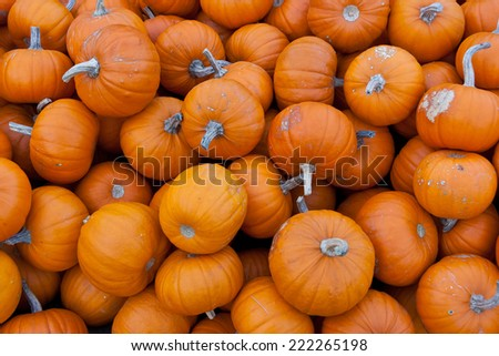 A bunch of small orange pumpkins for sale in Innsbruck, Tirol, Austria - stock photo