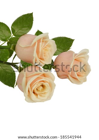 A bunch of white roses - stock photo