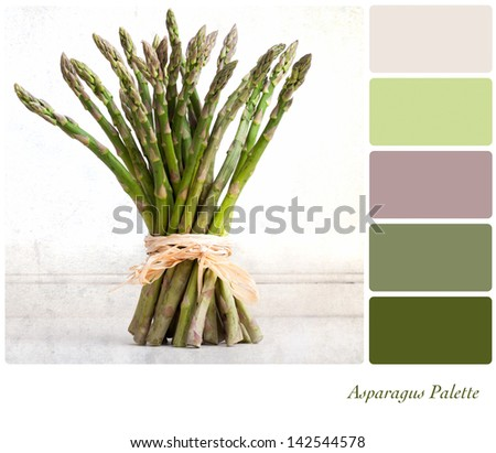 A bundle of asparagus tied with raffia on a vintage style background,  in a colour palette with complimentary colour swatches. - stock photo