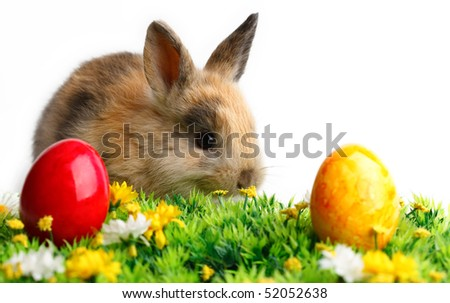 A bunny with easter eggs isolated on white background - stock photo