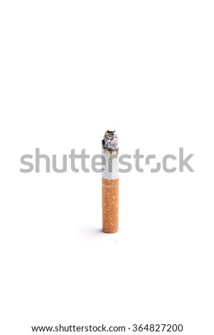 A burning cigarette butt on a white background - stock photo