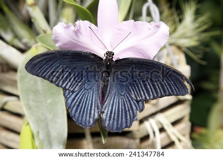 A butterfly  - stock photo