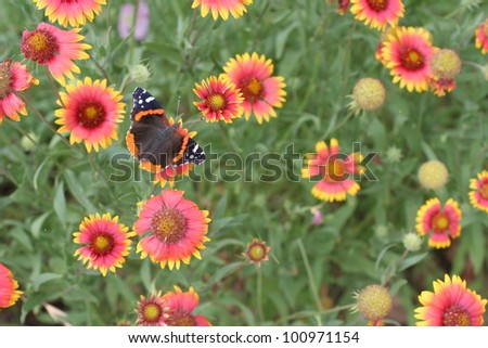 A butterfly in a field of blooming wildflowers - stock photo