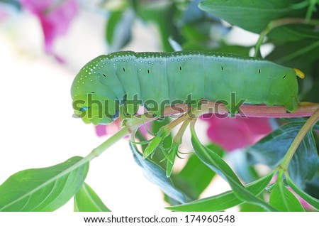 A butterfly larva is staying on the plant shoot on bright background - stock photo