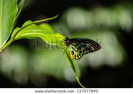 A butterfly on a leaf - stock photo