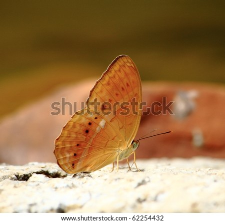 a butterfly resting on a  rock - stock photo