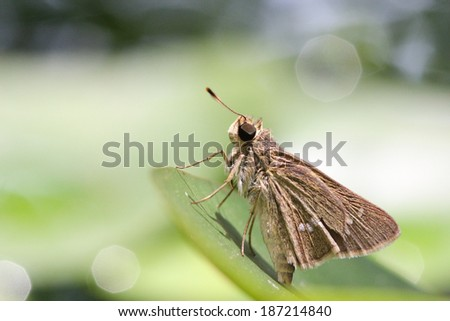 A butterfly resting on  leaf. - stock photo
