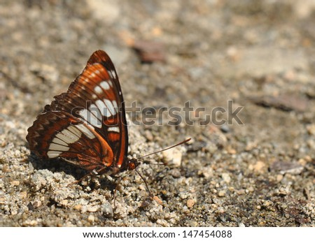A butterfly rests on a beach in British Columbia. - stock photo