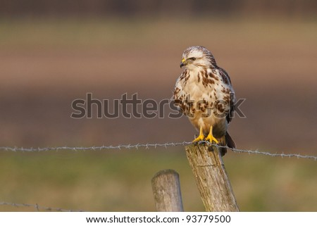 a buzzard on a pole
