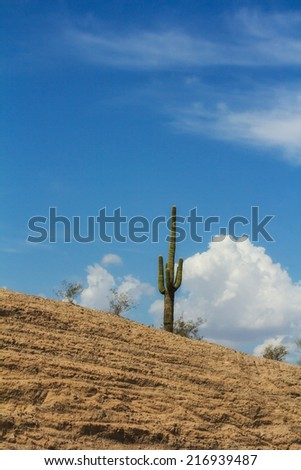 A cactus in the Sonoran desert. Capture taken in Arizona, USA.