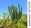 A cactus photo with lots of details, USA - stock photo
